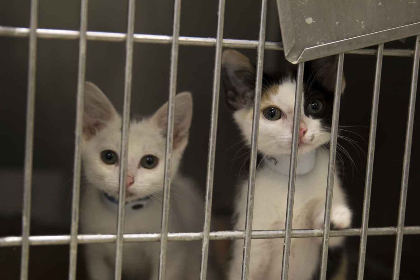 OKC Animal Shelter celebrates Adopt a Cat Month – UCentral