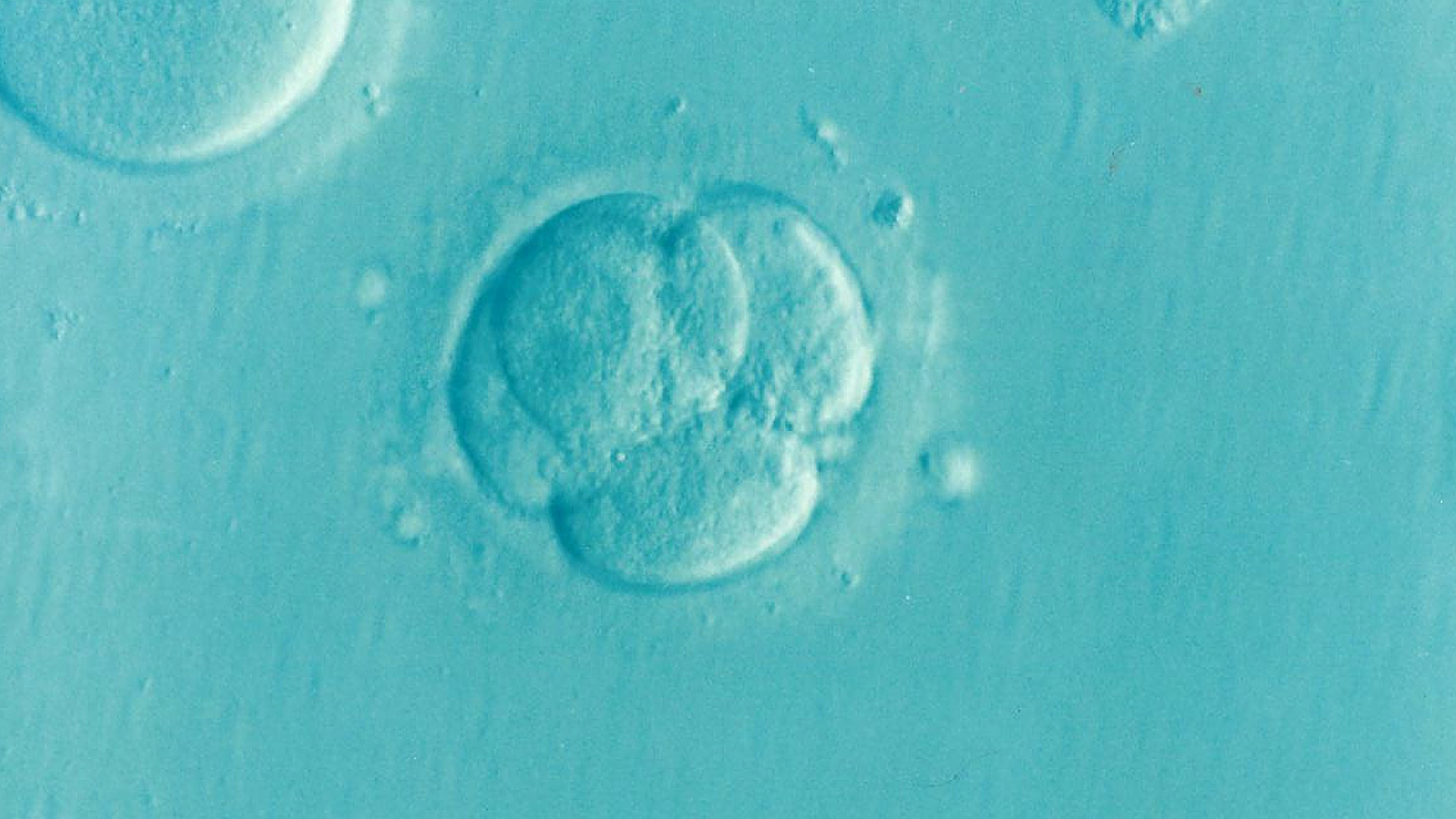 Embryoids Spark Moral Debate